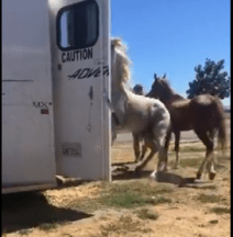 Using a PB horse to block her from going backward