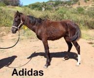 HiCaliber Adidas May 18