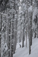 March powder dump at our local mountain! March, 2016