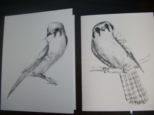Kestrel Notecards