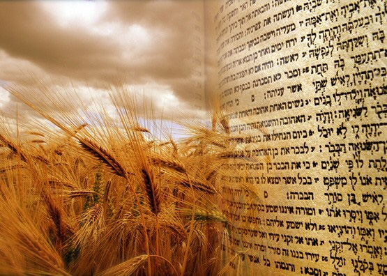 Developing Godly Character in the Omer