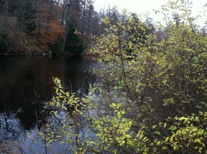 Contookut River in Peterborough, NH