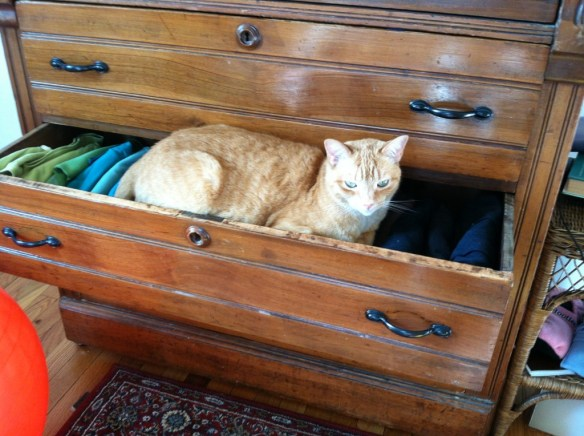 cat lying on shirts in a drawer