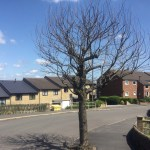 Consultation About Dead Tree Outside 93 Stannington View Road S10 (our reference 12042635) - Sheffield City Council 💥😭😭💥