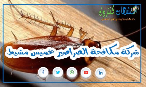 شركة مكافحة الصراصير بخميس مشيط