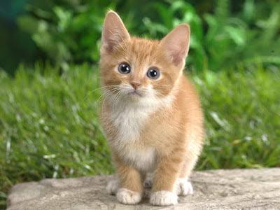 will cat make us crazy