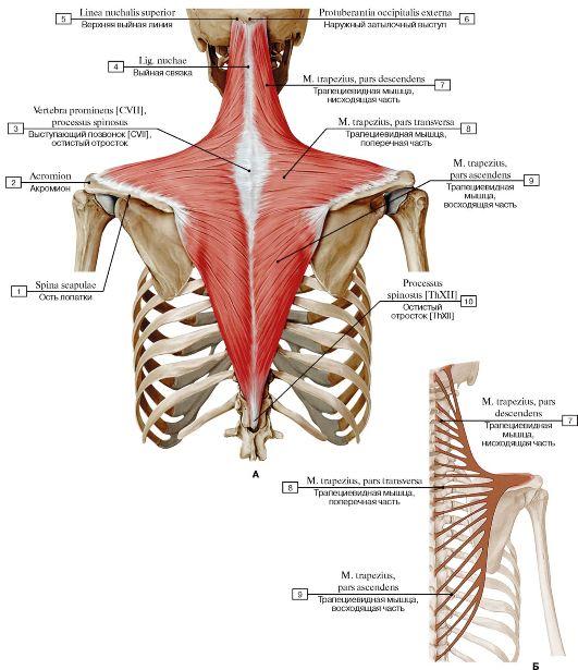 hogyan lehet enyhíteni a vállízület osteochondrozisának fájdalmait