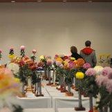 Chrysanthemum-051
