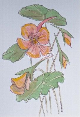 "Nasturtium, watercolor, 8"" x 10"""