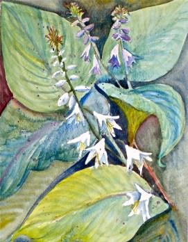 """Hostas, watercolor, 16"""" x 20"""""""