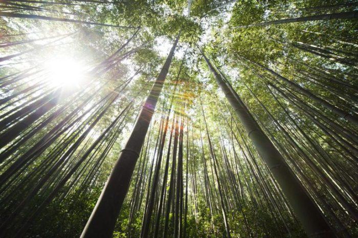 bamboo-364112_1280-2