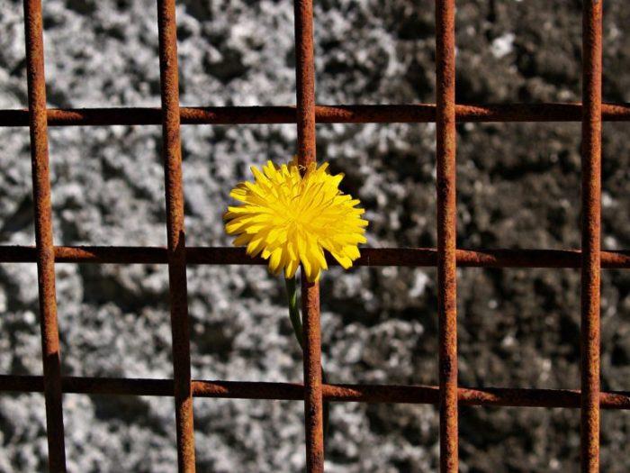 daisy-1437029_1920