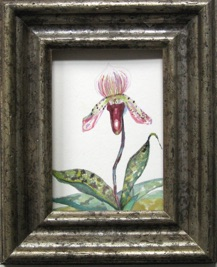 Stand Alone - Paphiopedium Lady Slipper