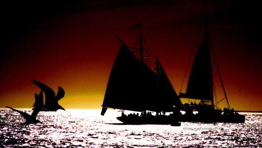 Key West Sunset 2983 Copyright Shelagh Donnelly