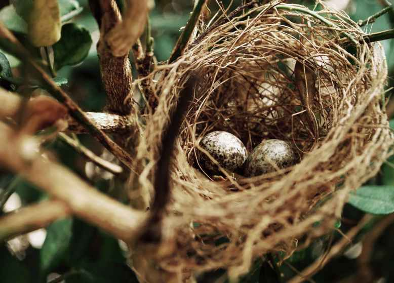 tilt shift photo of two white bird eggs on a nest