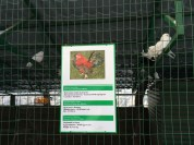 The rare pigeons and chickens at the zoo
