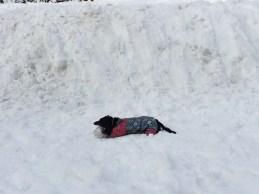 WEINER DOG IN A SNOWSUIT
