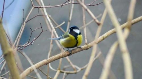 bird on dry autumn twigs