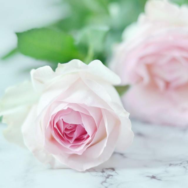 Rosenliebe nicht nur zum Muttertag rose flowers flowerstagram sundays weekend