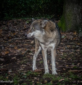 wildpark-poing-5353