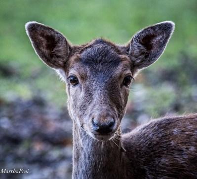 wildtierpark-5053