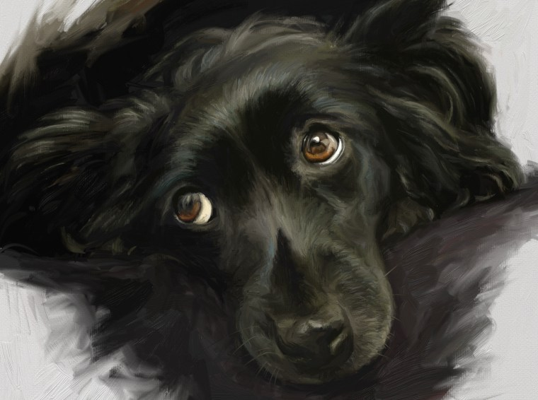 final 8 tips for painting black fur traditional and digital in artrage step-by-step tutorial