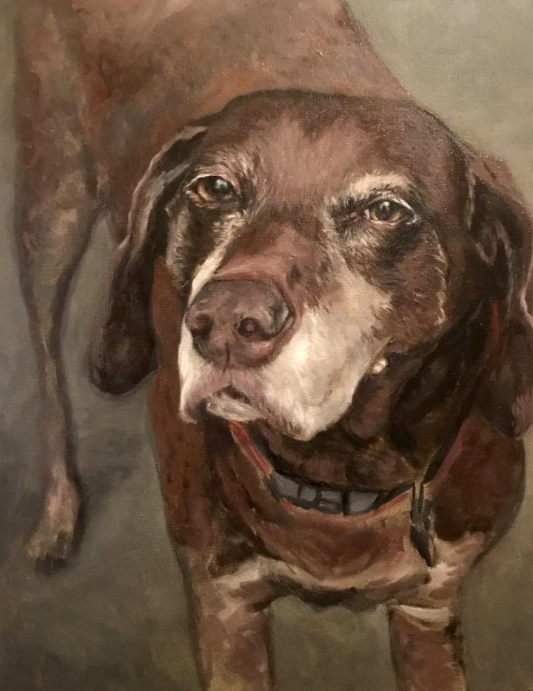 Duke senior dog portrait face details