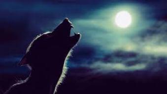 hp werewolf