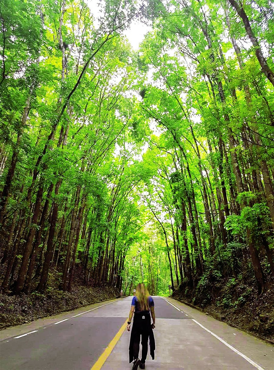 Man-Made Forest in Bilar Bohol