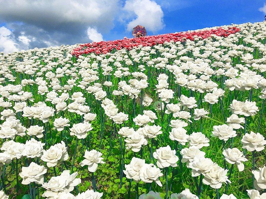 16,000 Roses