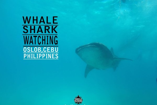 Travel Guide to Whale Shark Watching in Oslob Cebu