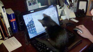 Jax on laptop