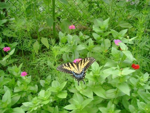 Butterfly #18.jpg