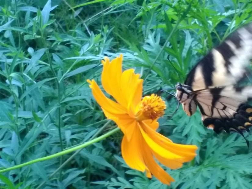 Butterfly #4.jpg