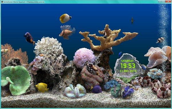 SereneScreen Marine Aquarium живой аквариум на рабочий