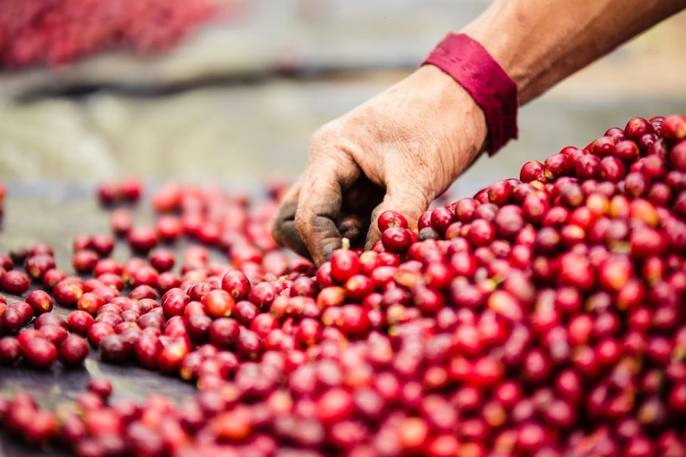 best-organic-coffee-processing