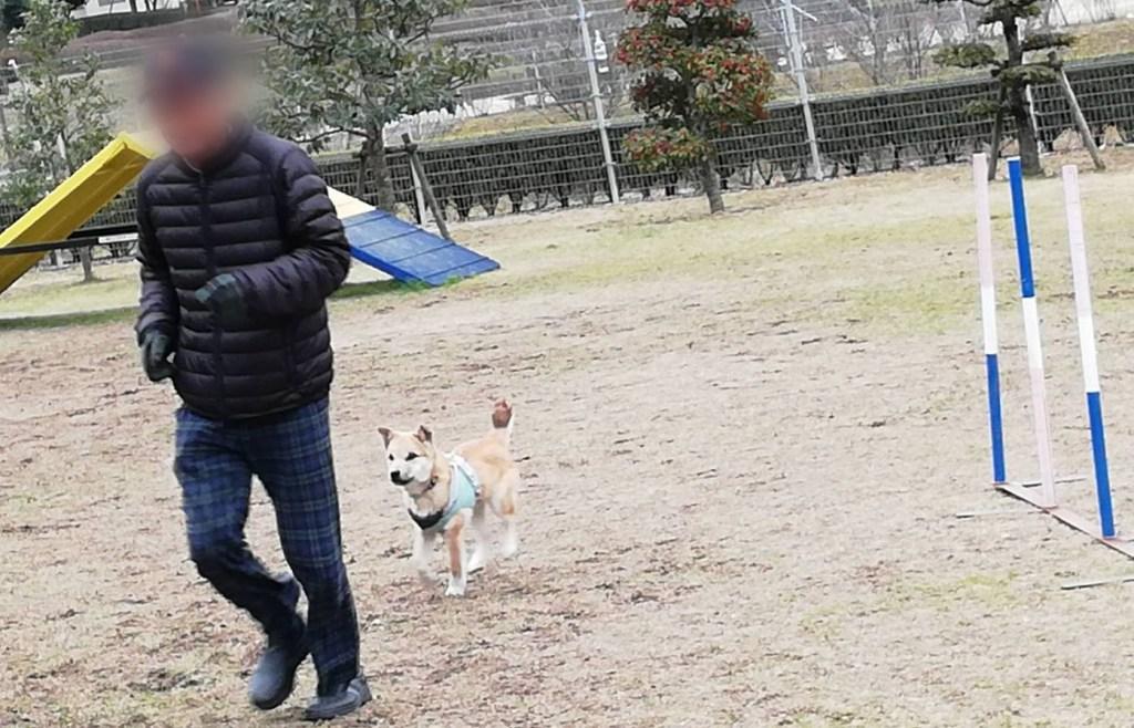 岡山保護犬あおの一日、岡山県動物愛護財団ドッグラン
