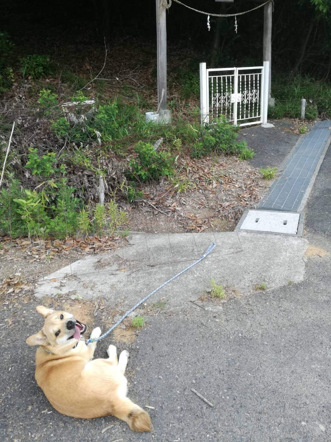 岡山保護犬あおの一日、散歩コース
