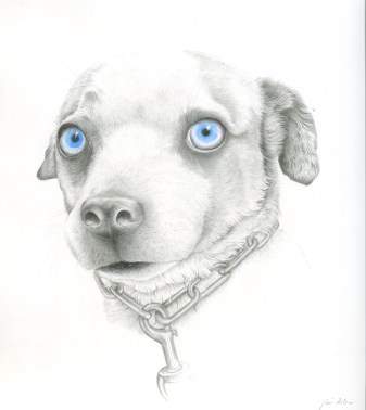 """SOLD. """"Fergie,"""" graphite and watercolor on Yupo, 9.5"""" x 8 3/4"""" unframed, 14"""" x 12 3/4"""" framed, $270."""
