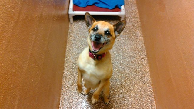 This Shelter Is No Longer Adopting Pit Bulls Chihuahuas Or Other Breeds Just All American