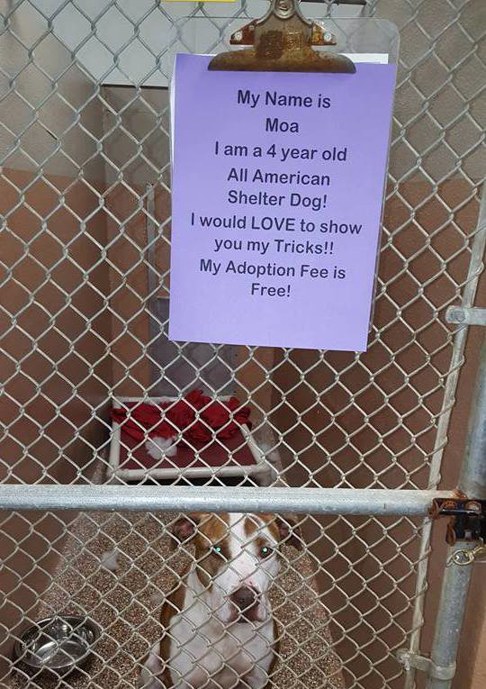Photo credit: Shenandoah Valley Animal Services Center