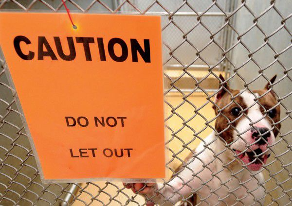 City Sued Over Pit Bull Ban
