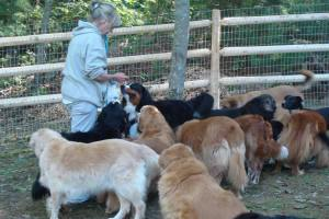 dogtripping-forever-home-clip-3