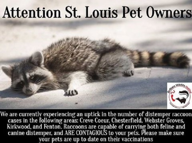 Officials Issue Warning After Deadly Distemper Outbreak in St. Louis