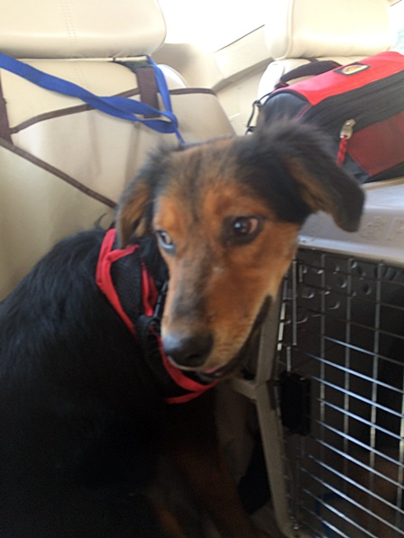 Pilots N Paws Set To Rescue Close To 50 Animals From