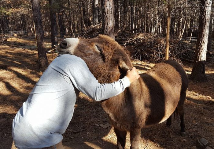 Rescue Group Finds New Snuggle Buddy For Loving Donkey Who Lost Home Due To Owner's Poor Health