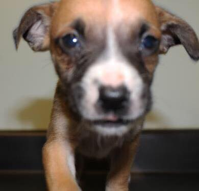 Shelter Implored Thieves To Return Puppy Who Was Stolen