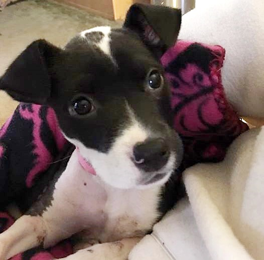 Pup Cruelly Tossed Onto Interstate From Moving Car Now Has A Loving Home