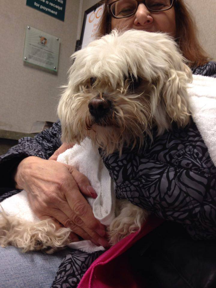 Dog with Fractured Pelvis in California Shelter Has Happy Ending