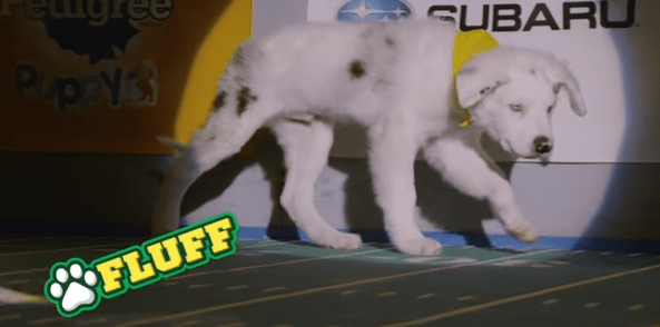 Puppy Bowl Gears Up For Another Fun Opportunity To Promote Adoptable Pups
